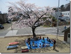 桜の木の下で♪とっても、おいしかったね♡ ~以上児~